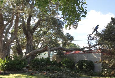 24 hour emergency tree care