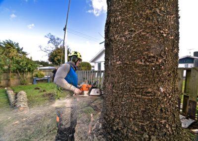 Tree Cutting by A1 Team